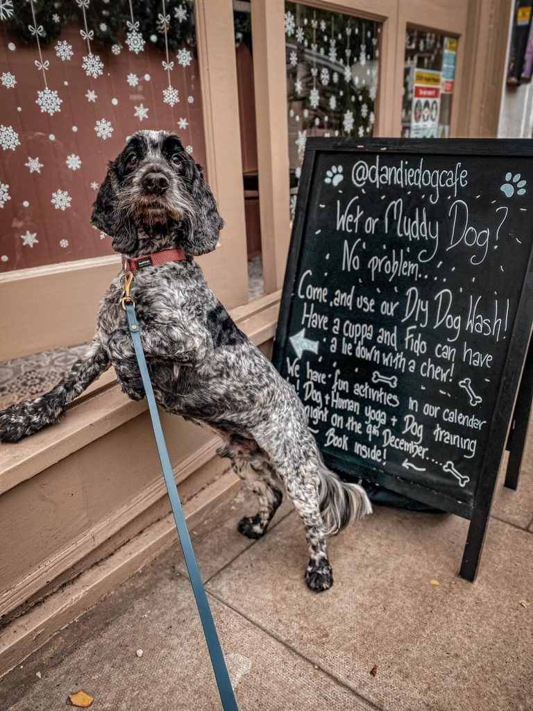 Dandie Dog Café Review: Where Hounds & Their Humans Can Eat Together