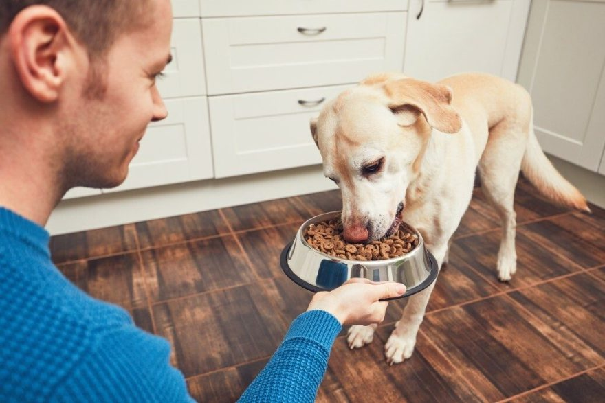 Dog Owner Trends In 2021 (What To Watch)