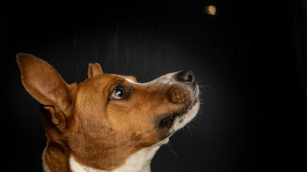 The Definitive Dog Food Glossary