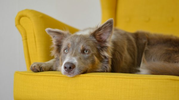How To Help A Dog With Anxiety - Do These Incredibly Simple Things