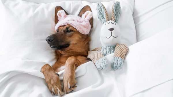 Dog Sleeping Patterns: How Important Are They?