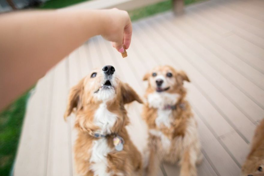 These Homemade Cinnamon Buns Are Sure to Be a Hit With Dogs Everywhere!