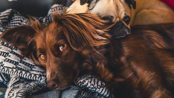 Why Dogs Sleeping in the Bedroom Is a Good Thing