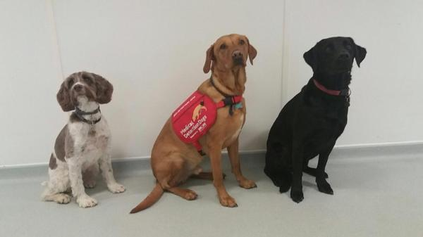 Meet the World's First Dogs to Detect Lung Infections