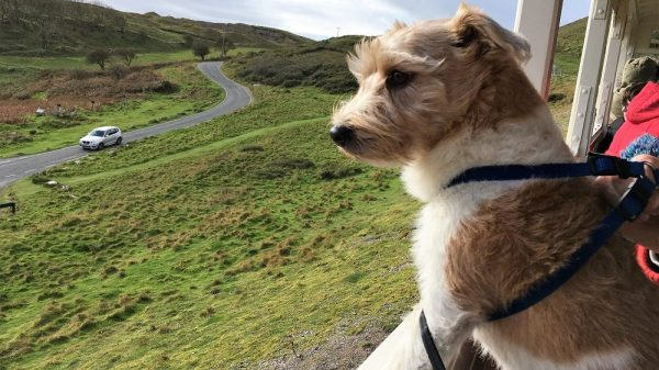 What to Do in Snowdonia With Your Dog