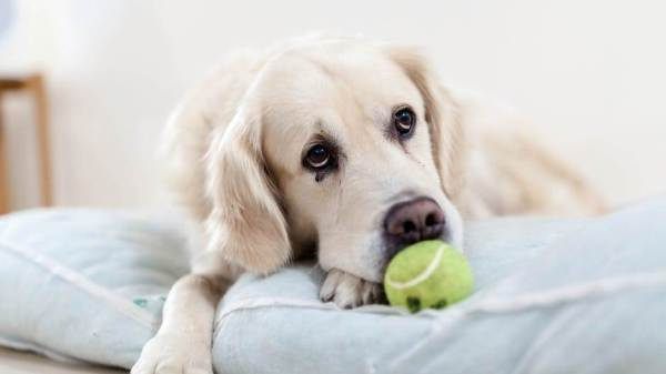Make Dog Training Fun With Just One Simple Thing