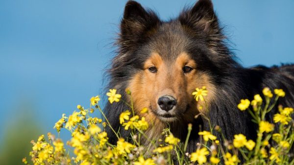5 Ways to Tell How Healthy Your Dog Is on the Inside
