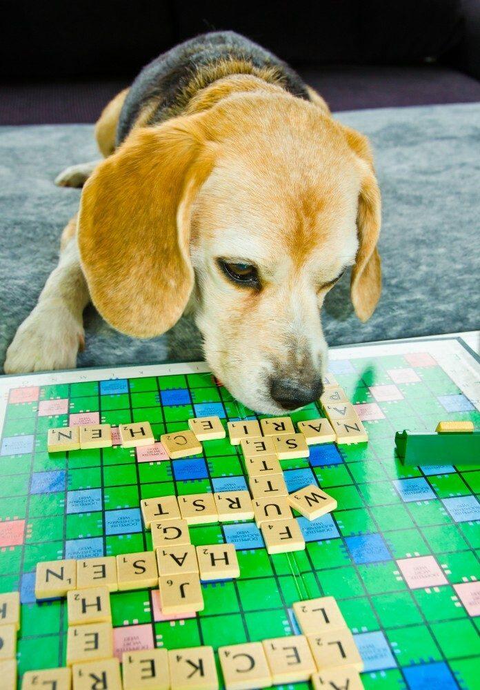 How Smart Is My Dog? (Canine Intelligence Explained)