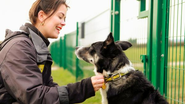 The Pain Of Giving Up A Dog Revealed in Hard Hitting Dogs Trust Advert