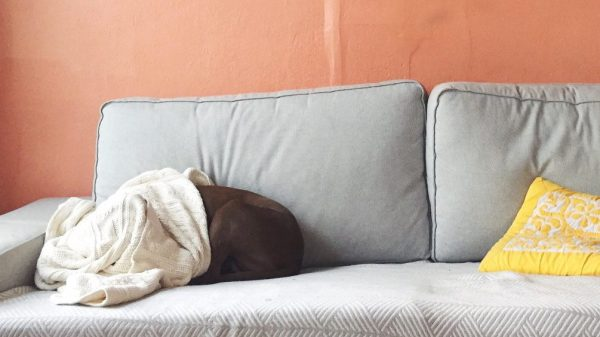 6 Proven Ways To Help Your Dog Cope With Fireworks