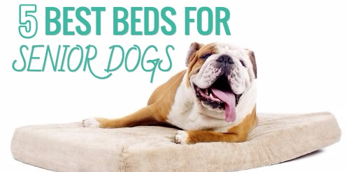 best beds for senior dogs