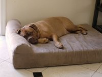 5 Best Dog Beds for Senior Arthritic Dogs