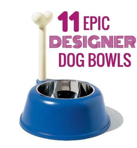 best designer dog bowls