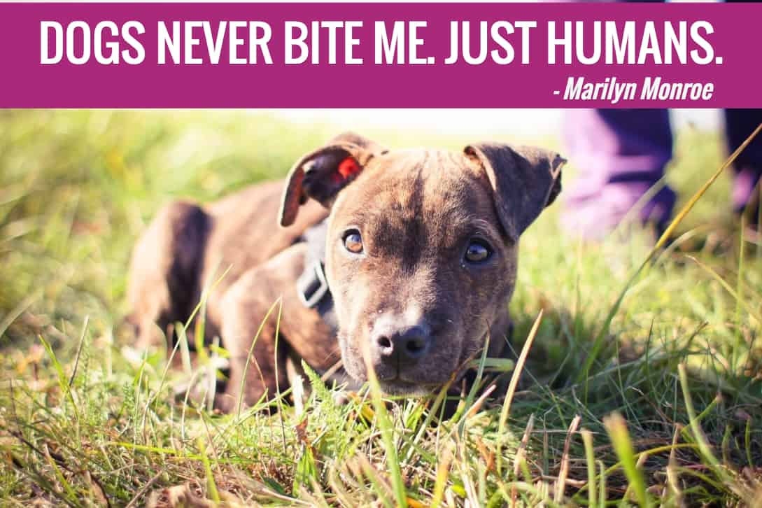 Dog Quotes: 25 Dog Quotes (With Pictures
