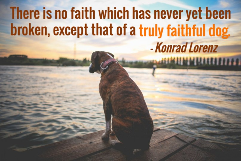 quotes for dog lovers
