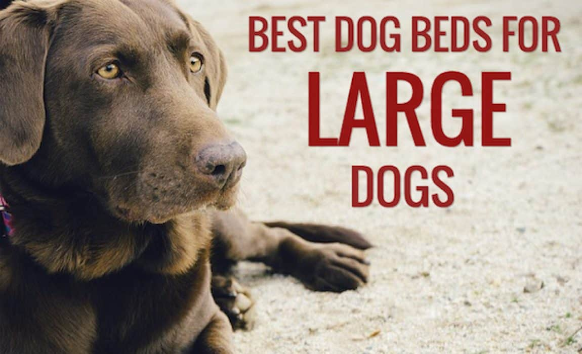 12 best dog beds for large dogs 2021