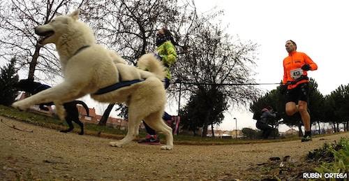 canicross running