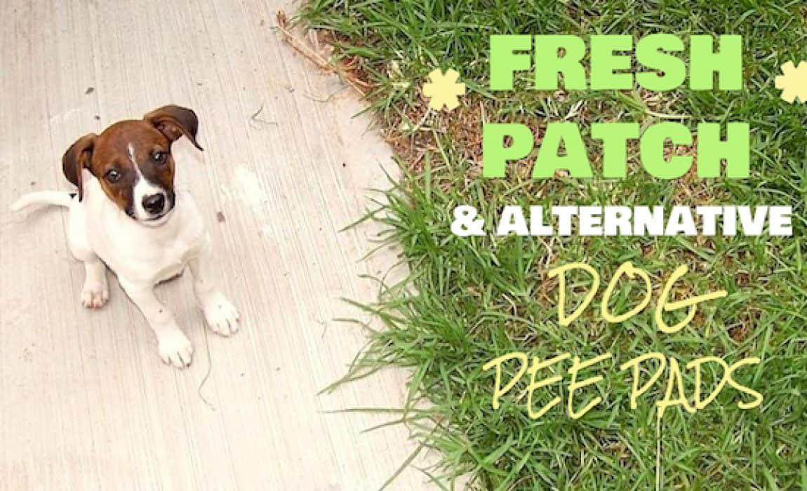 alternative grass dog pee pads review