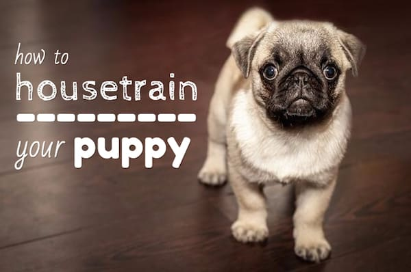 how-to-housetrain-a-puppy