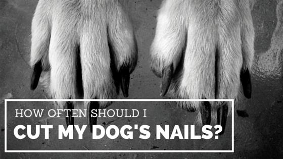 how often should I cut my dog's nails