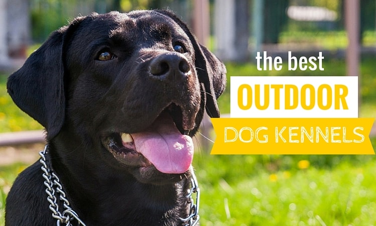 5 best outdoor dog kennels canines