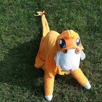 4 Pokemon Dog Costumes For Halloween: Catch 'Em All!