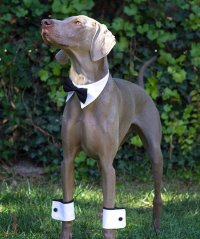 10 Adorable Pieces of Dog Wedding Attire: Classy Canine