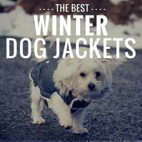 7 Best Winter Dog Coats: Cozy Jackets To Keep Your Canine ...