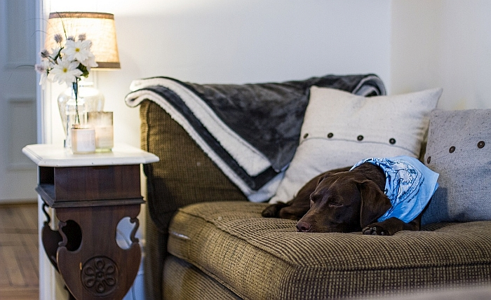 sofa coverings dogs whole home sofas 5 best dog couch covers protect your from pup s paws claws for homes with