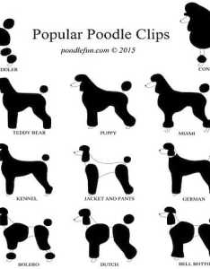 Types of poodles also all kinds fluffy sizes shapes and colors rh  ofmine