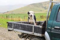 5 Best Dog Crates for Truck Beds: Keeping Your Pooch Safe
