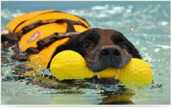 dog Aquatic Therapy