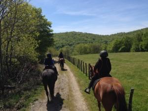 paseo caballo