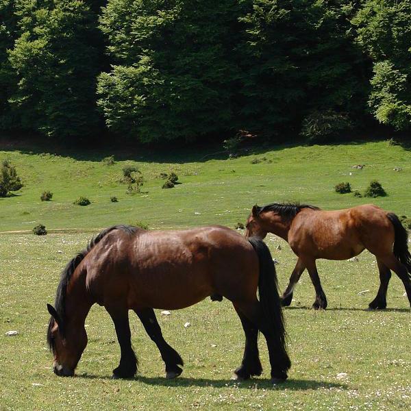 casa rural ecológica Kaanoetxea - Paseos a caballo