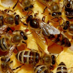 Abejas - Apicultura - miel - museo