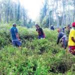 Merasa Punya Hak, Ratusan Warga Kendalrejo Babat Hutan