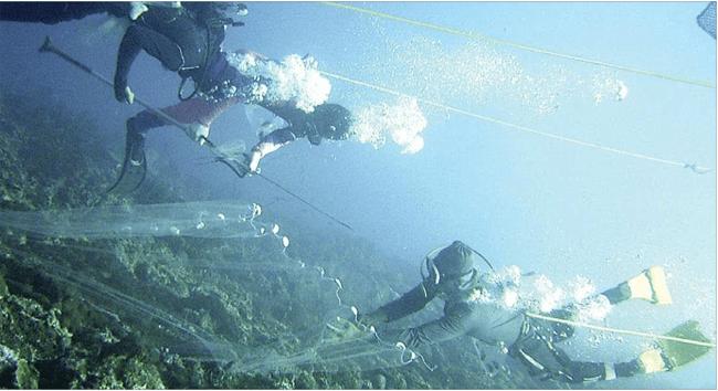 aktivitas-penangkapan-ikan-terus-meningkat-januari-hingga-oktober-ikan-hias-masih-mendominasi-kegiatan-ekspor-banyuwangi