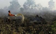 Permalink ke 7.900 Ha Hutan dan Lahan di Riau yang Terbakar
