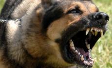 Permalink ke Antisipasi Anjing Gila, Disprenakbunhut Turunkan Tim