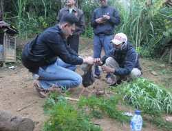 Satnarkoba Polres Bukittinggi Temukan Tanaman Ganja,  Seorang Warga Jorong Koto Laweh Ditangkap