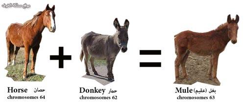 تزاوج البشر مع الحيوانات ما بين الأساطير و الحقائق