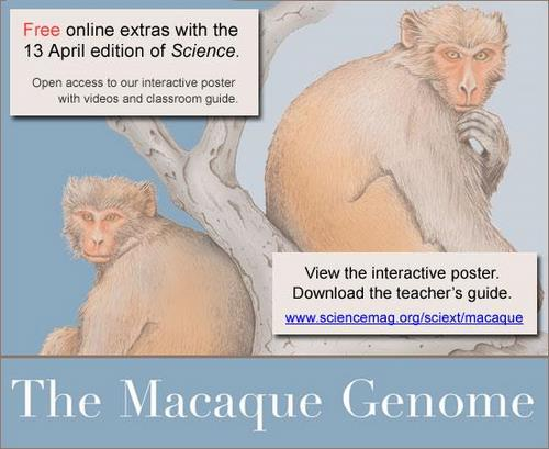 Science Macaque Genome