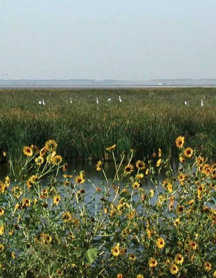 From Fort Hays Univeristy Wetlands Education Center Website