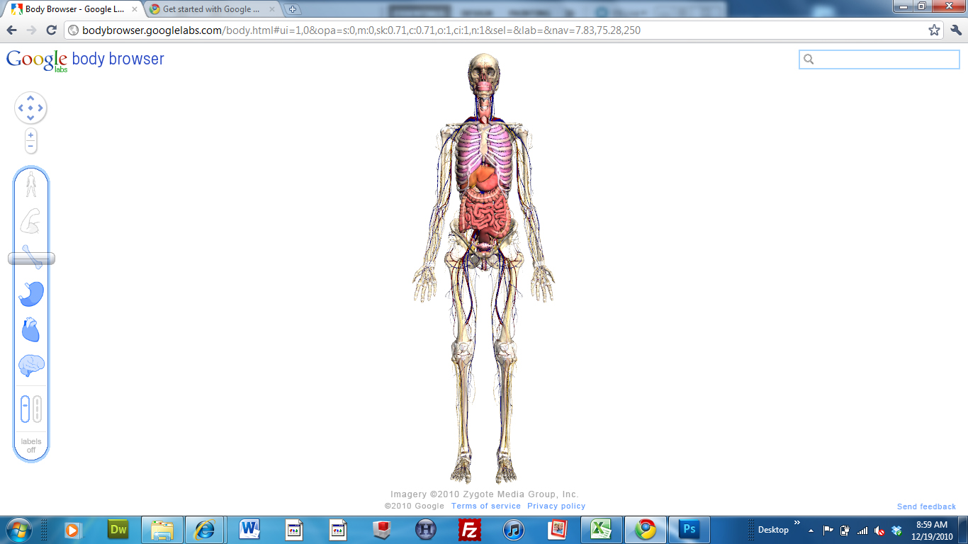 muscular system |