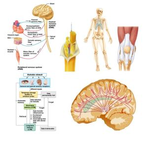 A Thematic Approach to Anatomy and Physiology