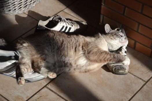 Photo d'Andy qui prend le soleil couché sur une chaussure - projet 365 3eme semaine