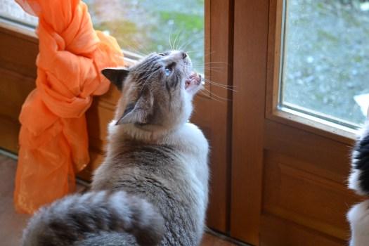 Photo de mon chat Andy qui réclame pour sortir - projet 365 3eme semaine