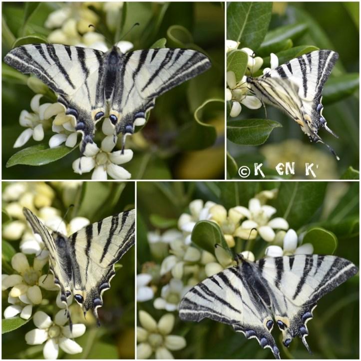 projet 52 thème n°19 papillon
