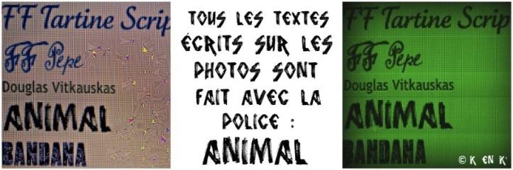 projet 52 thème n°19 animal
