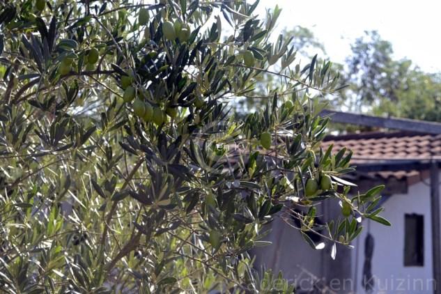 arbre-cuisine-olive-blog
